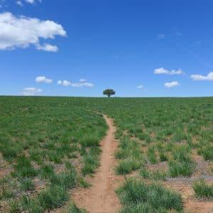 McPhee-Trail-Dolores-Colorado-Trails-2000