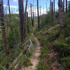 Missy-Thompson-Missionary-Ridge-Burn-Area-Wildflowers