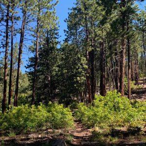 Log Chutes 2 Trails 2000 Durango