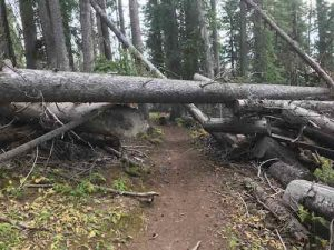 Downed trees: before