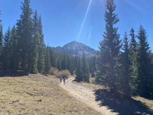 road-before-sharkstooth-pass-aspen-loop-trail-mancos-durango-trails-colorado