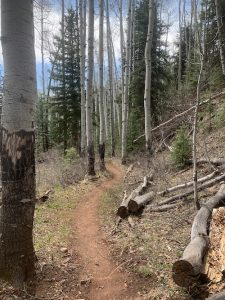 first-fork-trail-report-durango-trails-may-2021