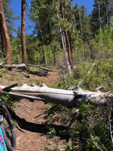log-chutes-trail-report-durango-colorado-1