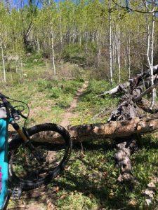 log-chutes-trail-report-durango-colorado